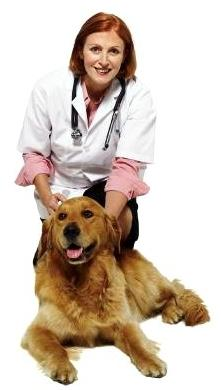 pet-and-vet-photo